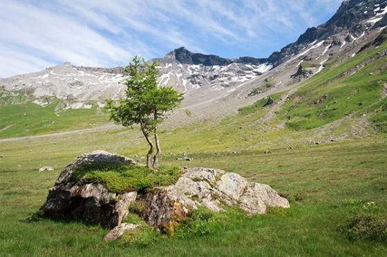Alps1sm