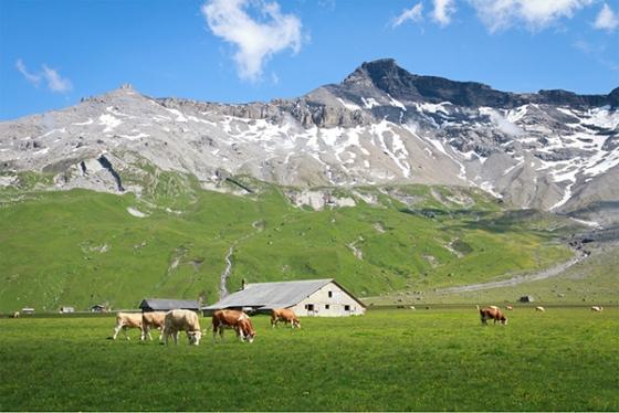Alps6sm